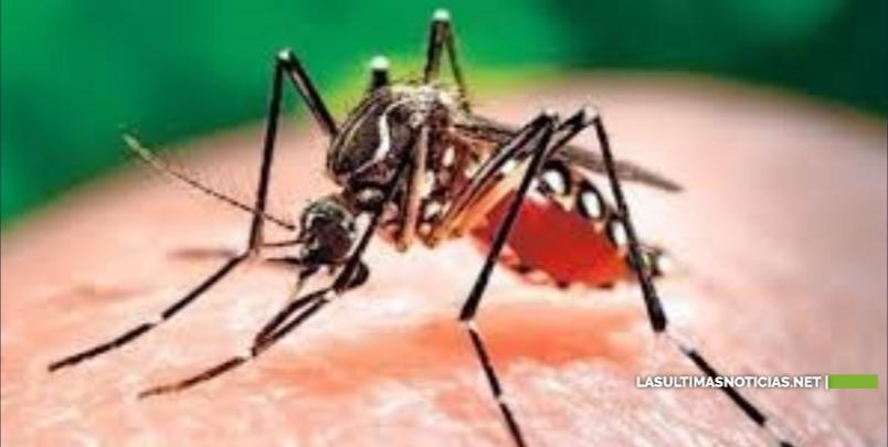 Detectan 1er caso de dengue por transmisión sexual en Europa; pareja había estado en RD y Cuba